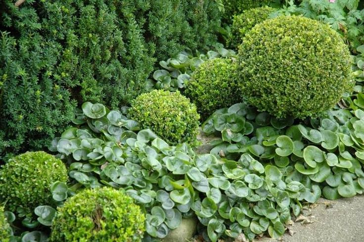 Pflegeleichte Hecke Garten : Die besten 17 Ideen zu Immergrüner Garten auf Pinterest  Immergrüne