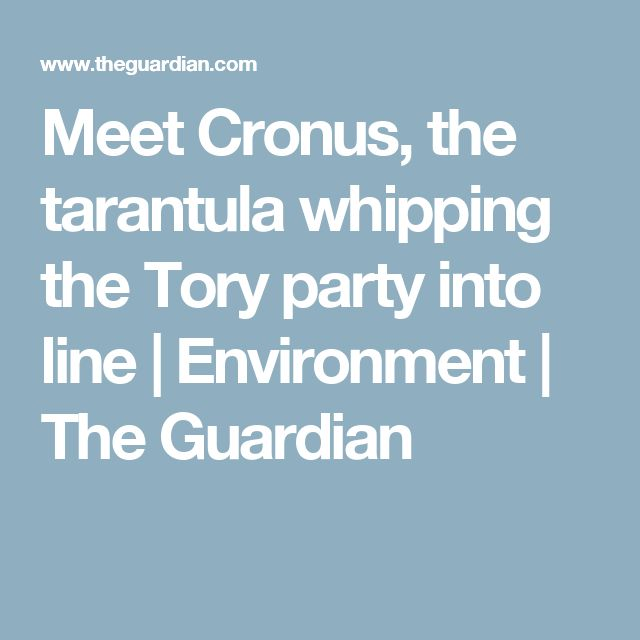 Meet Cronus, the tarantula whipping the Tory party into line | Environment | The Guardian