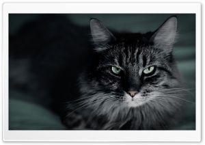 Not Happy Cat HD Wide Wallpaper for Widescreen