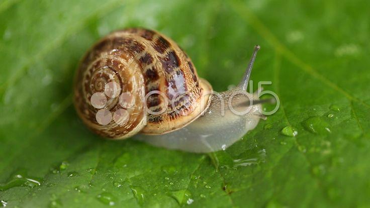 $15 - snail crawling on a leaf