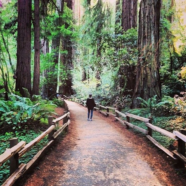 Hiking in redwoods :)
