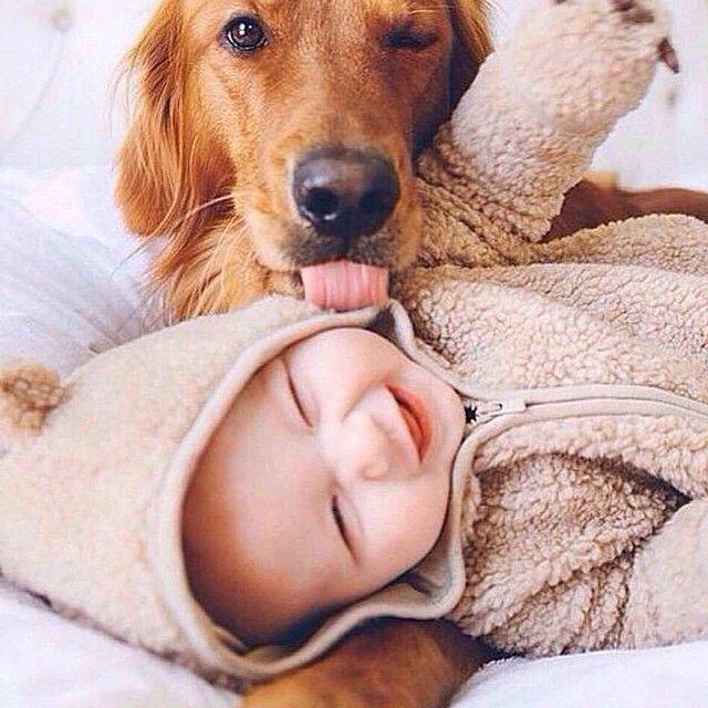 66 fotos que comprovam a amizade entre bebês e cachorros                                                                                                                                                                                 More