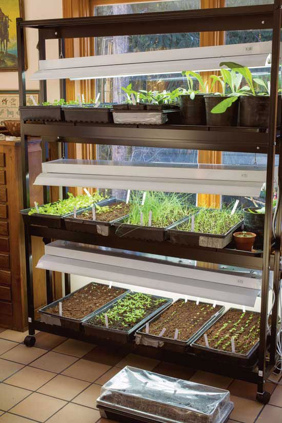 I want to start my own vegetable seedlings this year. Will I need special light bulbs?