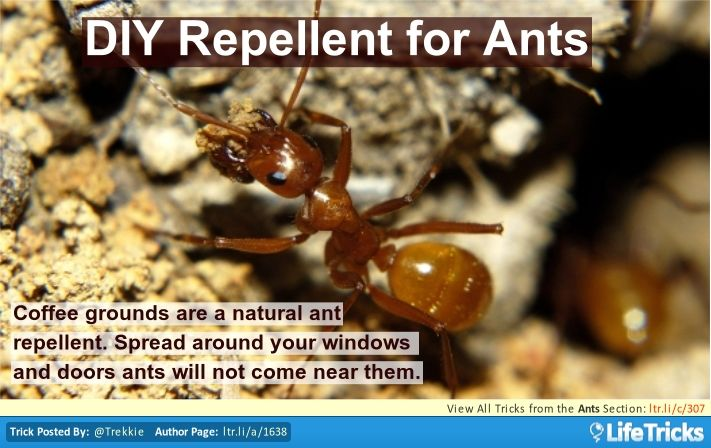 56 Best Pest Amp Rodent Control Hacks Tricks And Tips