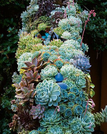 Studded with glass ornaments, a garland of echeverias, sempervivums, sedums, and other
