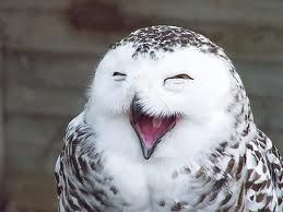 Beautiful CreaturesSmile Owls, Laugh Owls, High Time, Happy Owls, Funny Animal, So Funny, Birds, Snowy Owl, Adorable Animal