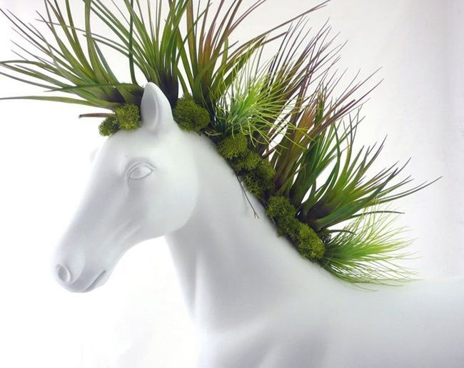 Chia pet gone amazing!:                                                                                                                                                                                 More