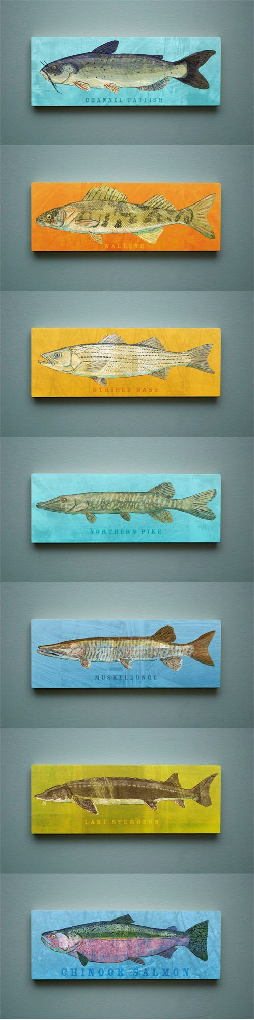 Freshwater Fish Art Series Large Art Block - Pick the Print - 4 in x 11 in Fish Wall Decor Fisherman Gift - Fathers Day Gift for Dad on Etsy, $24.00