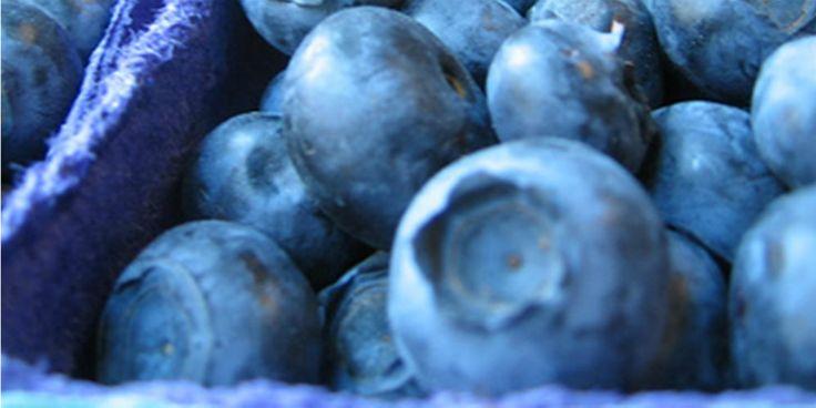 Τα μύρτιλλα μπορoύν να βοηθήσουν στην καταπολέμηση του Αλτσχάιμερ