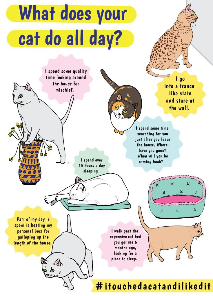 What Does Your Cat Do All Day We Had A Good Hard Look At All The Things Our Cat Loves To Do Starting With Sleeping Not In Pet Care Cats Fancy