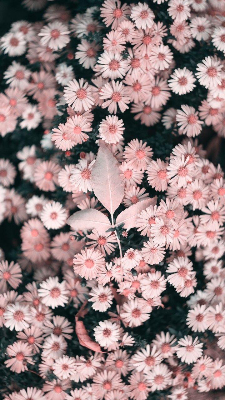 #Crisantemos_enanos. Total beauty ????