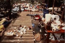 Suicide in Guyana--the Jonestown Massacre. | African American Registry