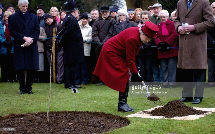 Britain's Queen Elizabeth II plants an Oak tree in the grounds of her Sandringham Estate as part of a fund raising initiative with Norwich Cathedral, after attending a Sunday service at St Mary Magdalene Church, with the Countess of Wessex and the Duke of Edinburgh on January 1, 2006, at Sandringham, England.