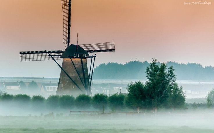 Wiatrak, Mgła, Drzewa, Świt