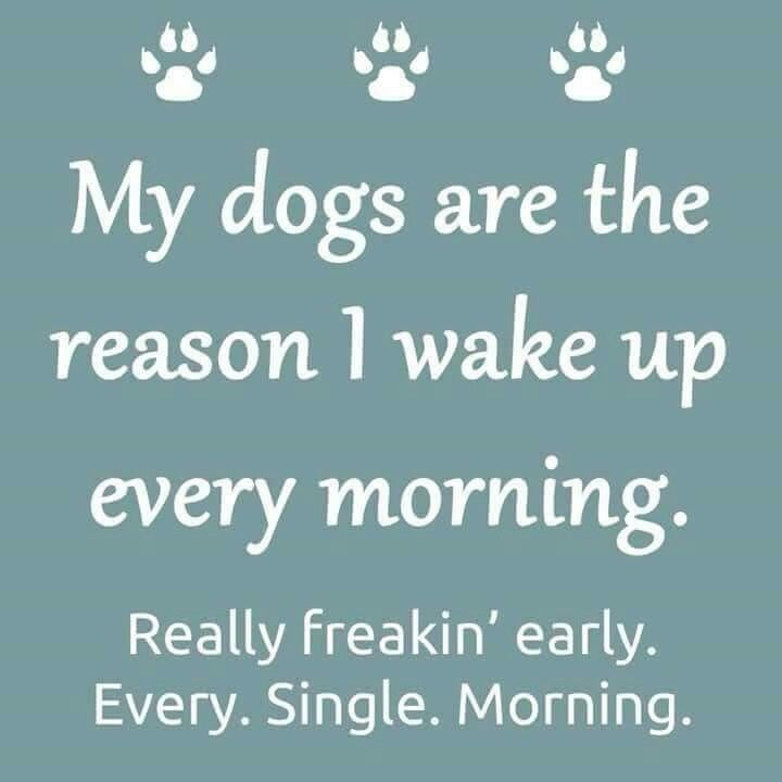 My dog 39 s are the reason i wake up every morning life is better with a dog pinterest - Seven reasons to make the bed every morning ...