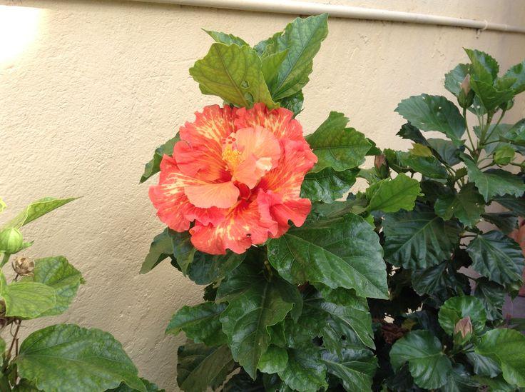 17 Best Images About Flores Impresionantes On Pinterest