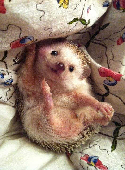 I love hedgehogs... they are sooo cute!