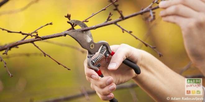 En mars, c'est toujours le moment de tailler les arbustes à floraison estivale (buddleia, perovskia...) , les arbres à pépins (pommiers, poiriers...) et les arbustes à petits fruits (cassissiers, groseilliers...). Quelles espèces et comment tailler ? http://www.jardipartage.fr/quand-tailler-les-arbustes/