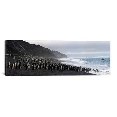 East Urban Home Panoramic Chinstrap Penguins Marching to the Sea, Bailey Head, Deception Island, Antarctica Photographic Print on Canvas Size:
