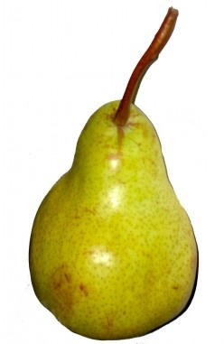 Pears are bell shaped - picture