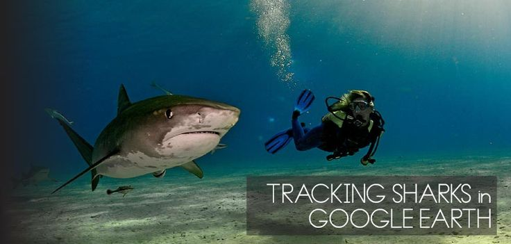 Track your favorite shark! Like spying, but legal.