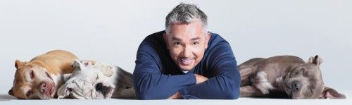 Cesar Millan, The Dog Whisperer will visit the Quad Cities for our next big fundraiser! Tickets and information here: http://gildasclubqc.org/gildas-club-in-the-community/dog-whisperer-will-check-into-the-qc/#
