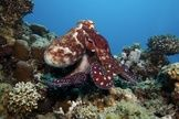 8 Crazy Facts About Octopuses