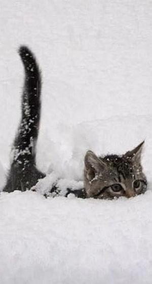 KÄTZCHEN KÄTZCHEN!! von VoyageVisue #kitty KITTY !! von VoyageVisuel #catsandkittens   – Love animals!!!