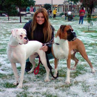 Did you know that WHITE boxers are usually deaf or hard of hearing???
