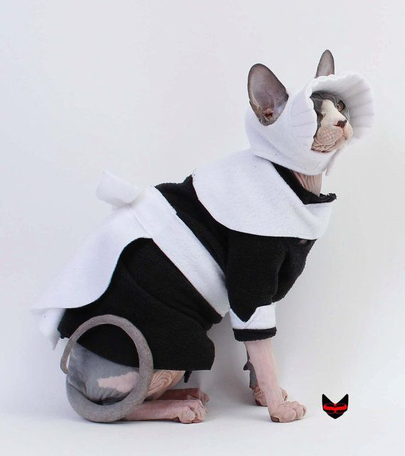 cat pilgrim costume wwwimgkidcom the image kid has it