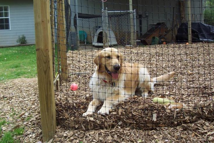 Diy Dog Fence Kit Easy To Install And Strong Enough For