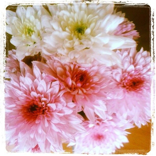 .@Incognito7dcv CarelessWhisper | Autumn flowers 4