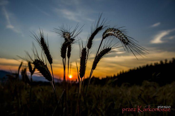 Karkonosze | michal-swiderski.pl