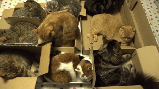 The cat traps are working   http://ift.tt/1Tipk1R via /r/cats http://ift.tt/1notFm0  cats funny pictures