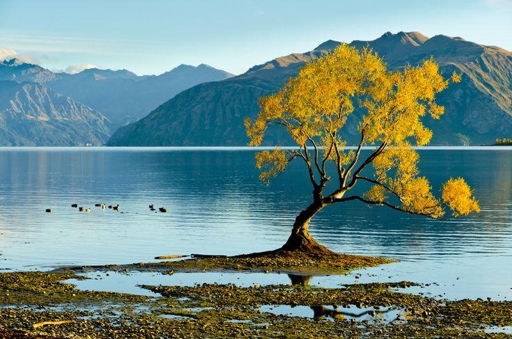 "500px / Photo ""Lone Tree"" by Jim Harding"