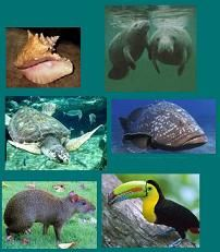 Flora y fauna de Bacalar