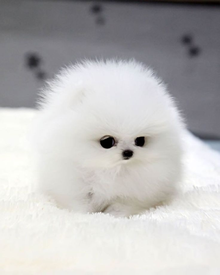 Pin by I'M ADDICTED TO YOU on Cute Puppy | Cute baby animals, Funny animals, Cute animal pictures
