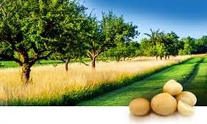 Suncoast Gold Macadamias was established in 1985. Our head office and processing facility are in Gympie, a thriving gold mining town on the Sunshine Coast of Queensland, Australia. The Gympie region is the centre of the original habitat of the native macadamia tree.