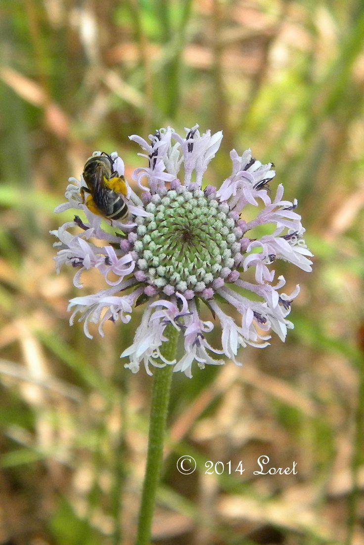 452 best florida friendly plants  u0026 florida natives images on pinterest