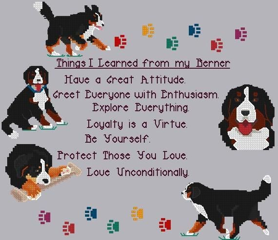 Things I Learned From My Berner Counted Cross Stitch Sampler Bernese Mountain Dogs Stitches 150w X 130h On 14 Ct 10 1 2 X 9 1 8 Inches In 2020 Bernese Mountain Dog Mountain Dogs Shetland Sheepdog