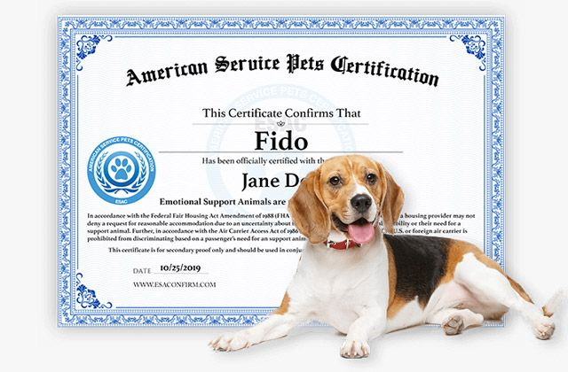 American Service Pets Esa Certificate Emotional Support Animal American Certificate