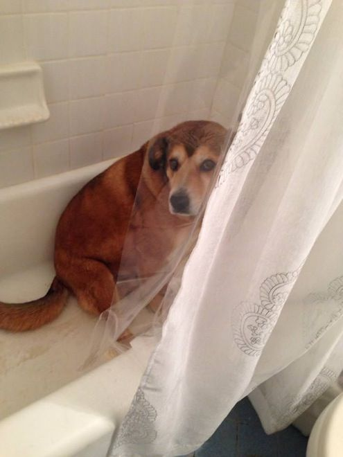 Best Pets Images On Pinterest Taking Pictures Your Pet And - 26 funny photos of guilty dogs
