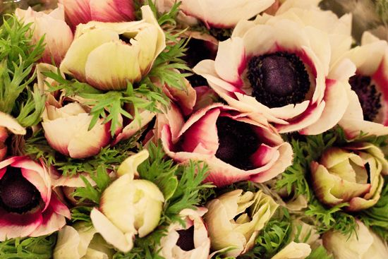 Flower Market Report [APR] | newcoventgardenmarket.com