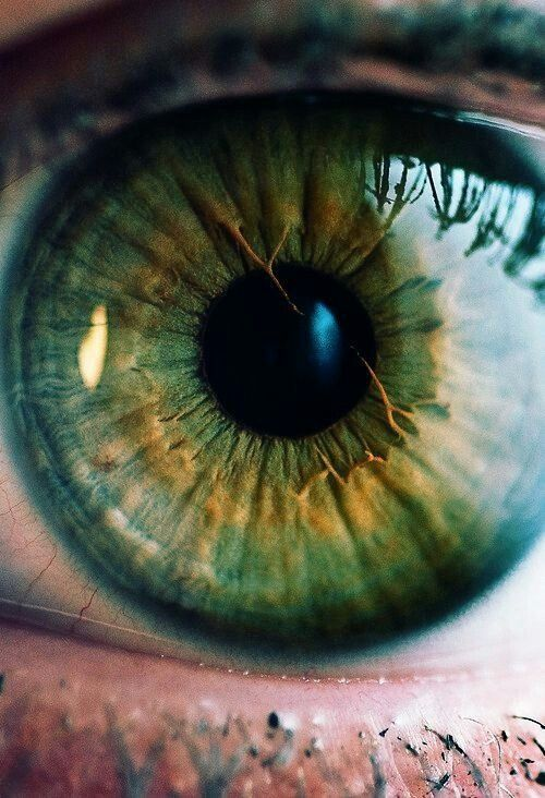 Green with gold and yellow around the pupil and dark blue ring around the iris