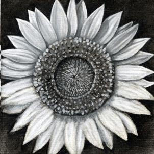 How To Draw A Sunflower Realistic Sunflower Step 20 For