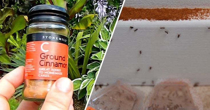 Stop your ant problem before it starts! Here's how one household spice can ward off ants as effectively as insecticides (without the harmful chemicals).