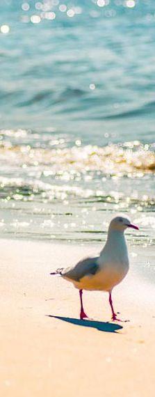 Sun Sand Surf & SeaGull
