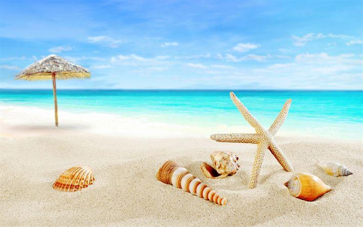 Hämta bilder Tropiska öar, beach, paradise, seashells, sjöstjärna, havet, ocean, resor koncept