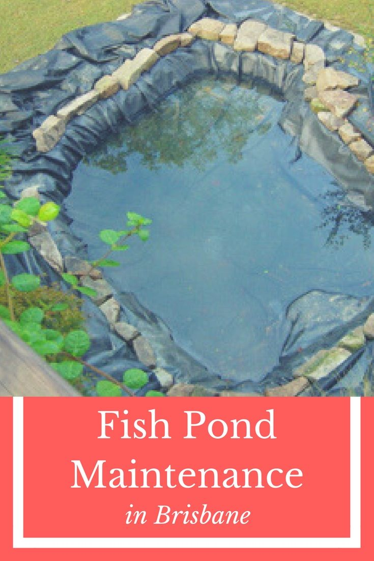 17 best ideas about pond maintenance on pinterest pond for Koi pond upkeep