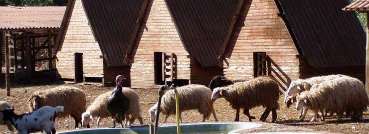 http://www.iacchelli.com/ Via Colle dell'Acero, 14 00049 Velletri (15° Km Via dei Laghi) +39 06 9633256 – +39 06 9634354 +39 334 6072197 +39 06 96143004 Giorno di chiusura: Lunedì
